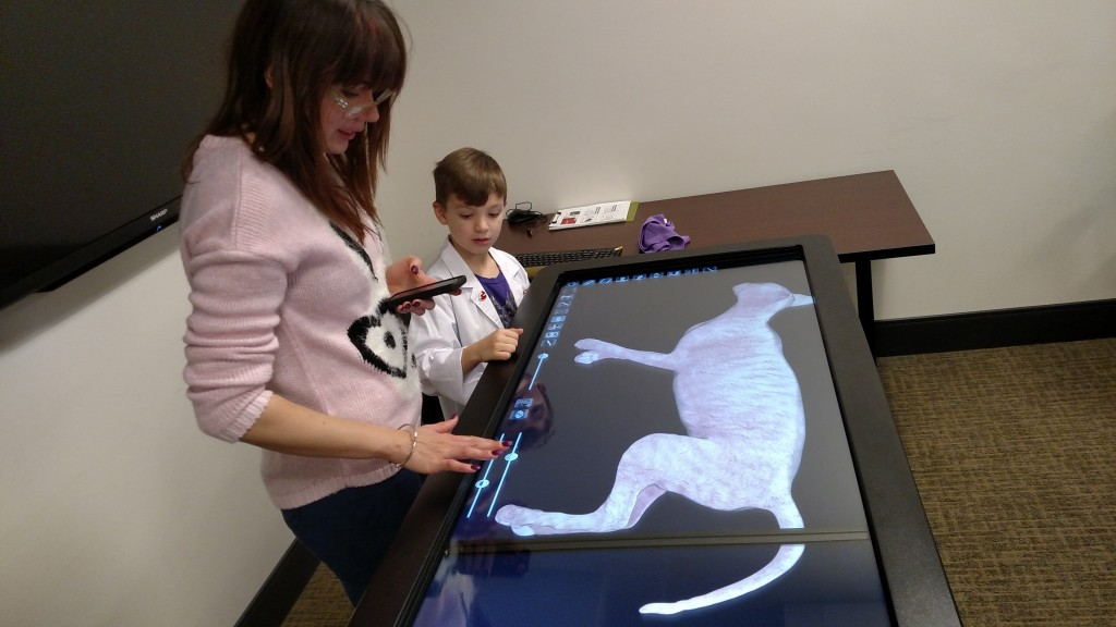 Virtually examining feline anatomy on the Anatomage table.