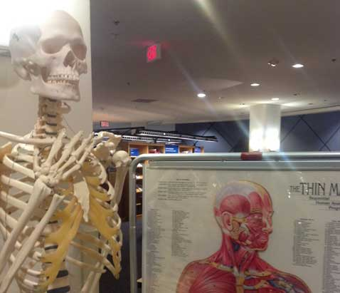 Anatomical resources, such as models, skeletons, and charts, are available.