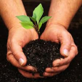 Public Health Community Advisory – Gardening for health is an old idea that is rapidly gaining wide recognition. The ramifications of gardening for health are widespread. The main purpose of […]
